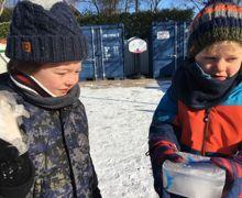 Frozen arctic animals